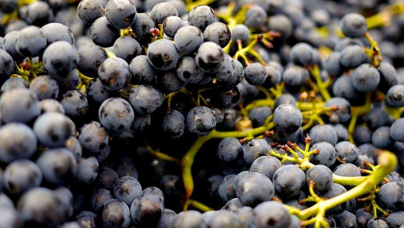 turismo para amantes del vino